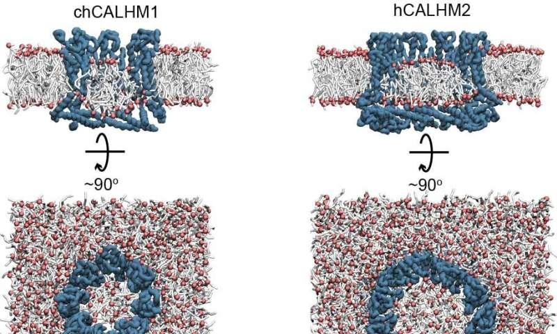 New look at odd holes involved in taste, Alzheimer's, asthma