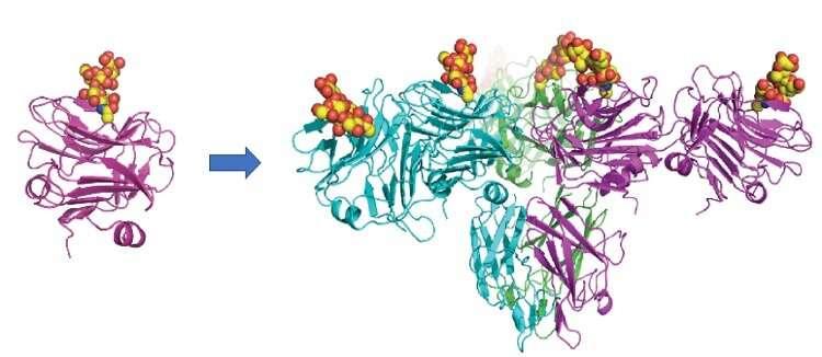 New Scottish drug shows promise in battle against COVID-19