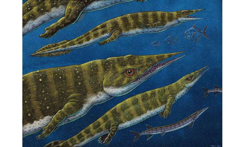 New thalattosaur species discovered in Southeast Alaska