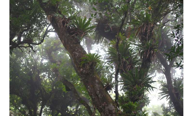 New 'tree dragon' discovered in Mexican forest