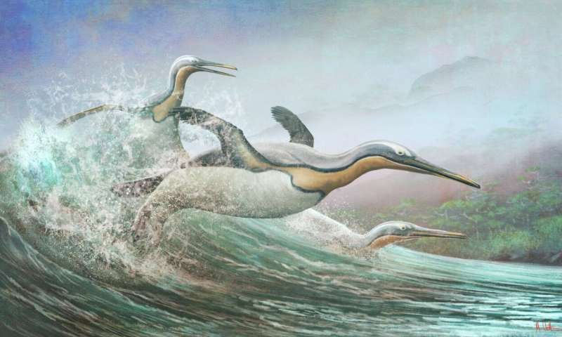 New Zealand's Ancient Monster Penguins had Northern Hemisphere Doppelgangers