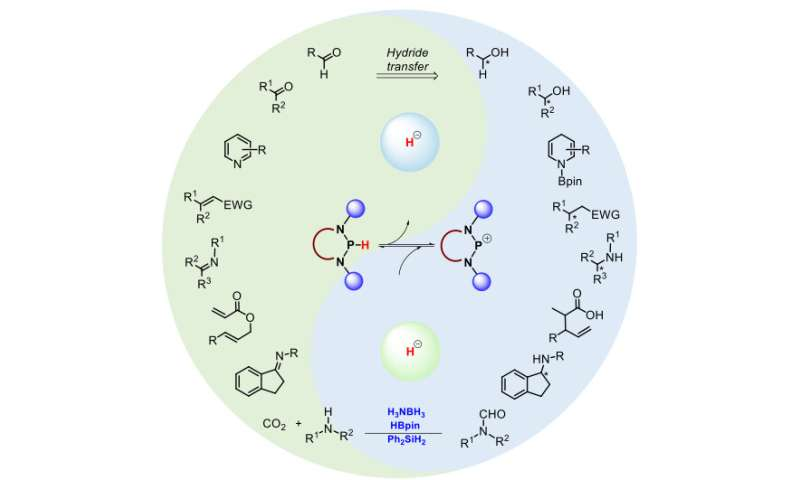 N-heterocyclic phosphines: promising catalysts for transfer hydrogenation