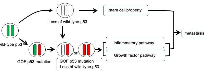 Notorious cancer protein mutations cooperate to proliferate disease
