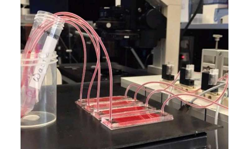 NYU Abu Dhabi researchers develop new tool for performing cancer liquid biopsies