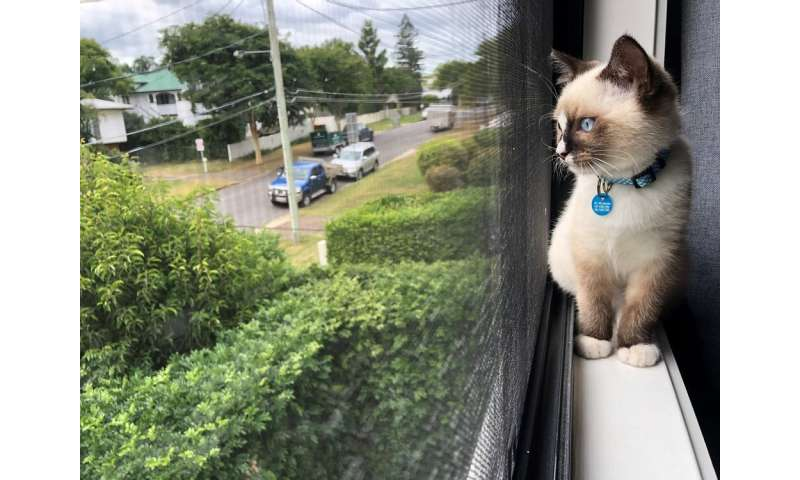 One cat, one year, 110 native animals: lock up your pet, it's a killing machine