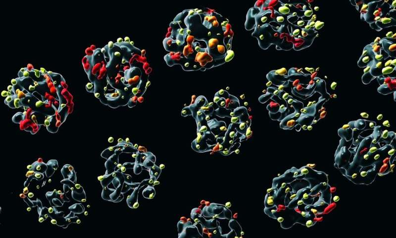 Oregon researchers reveal why heat stress damages sperm