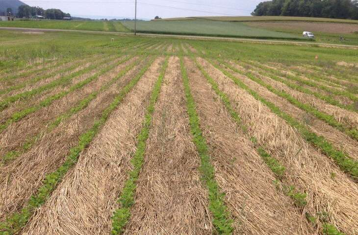Organic soybean producers can be competitive using little or no tillage