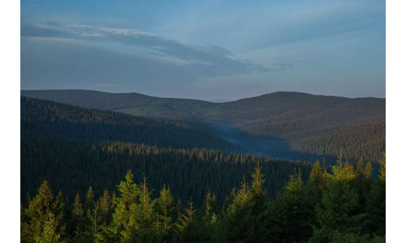 Over 20,000 hectares of the oldest Ukrainian forests are set to become natural monuments