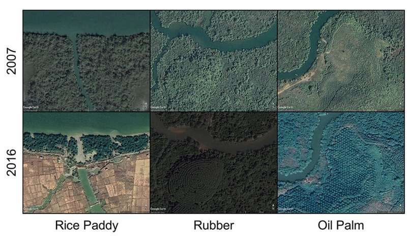 Over 60% of Myanmar's mangroves deforested in the last 20 years