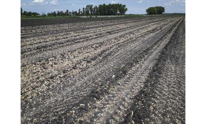 Superar la pérdida de carbono de la agricultura en turberas