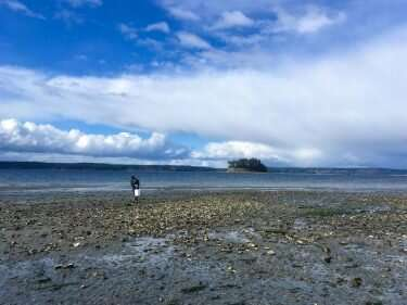 Pacific oysters in the Salish Sea may not contain as many microplastics as previously thought