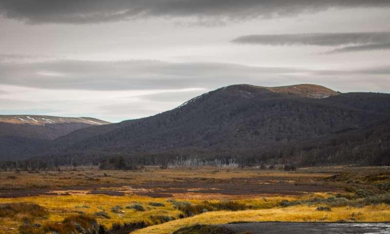 Peatland preservation vital to climate