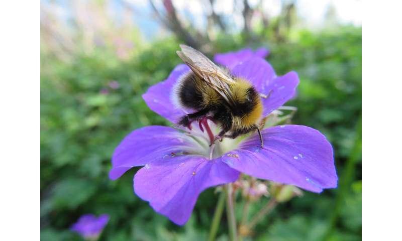 Los pesticidas perjudican el desarrollo del cerebro de las abejas