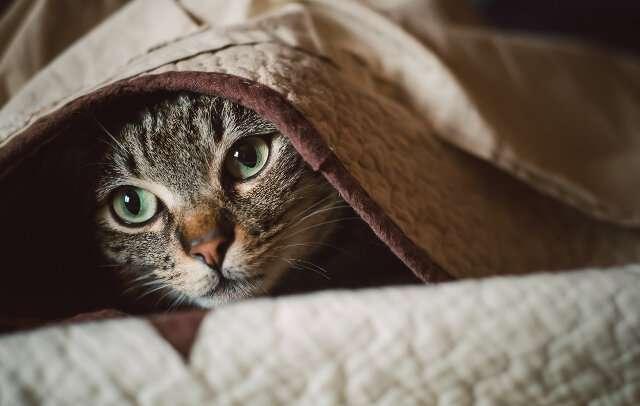 Pet stress has increased during COVID-19, bringing behavior problems