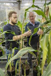 Plants without cellular recycling systems get creative in thedark