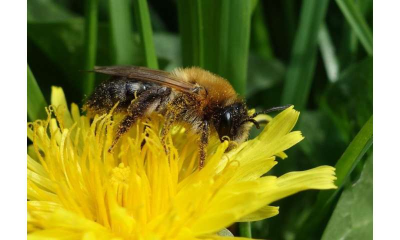 Pollinator monitoring more than pays for itself
