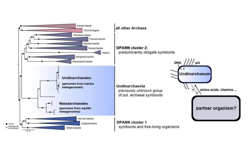 Previously undescribed lineage of Archaea illuminates microbial evolution