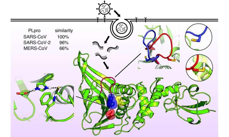 Progress toward antiviral treatments for COVID-19