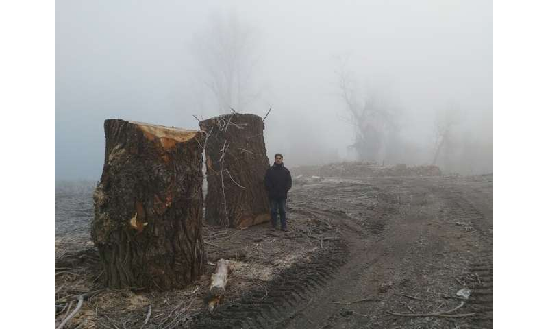 Protected Hungarian forest by the Tisza River destroyed