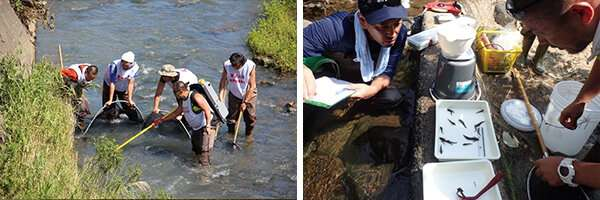 Protecting eels protects freshwater biodiversity