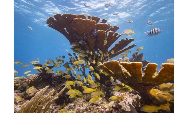 Reefs all over the world are being affected by the toxins in sunscreens