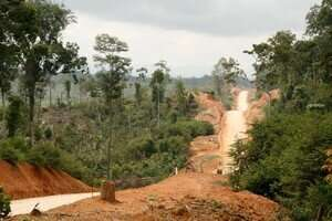 Reforestation can only partially restore tropical soils