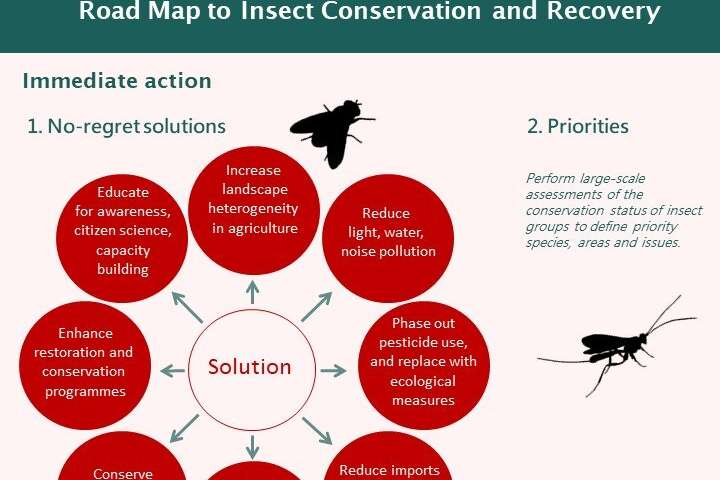 Researchers united on international road map to insect recovery