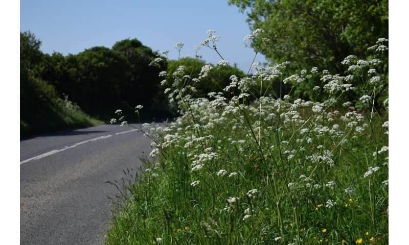 Road verges could be havens for pollinators