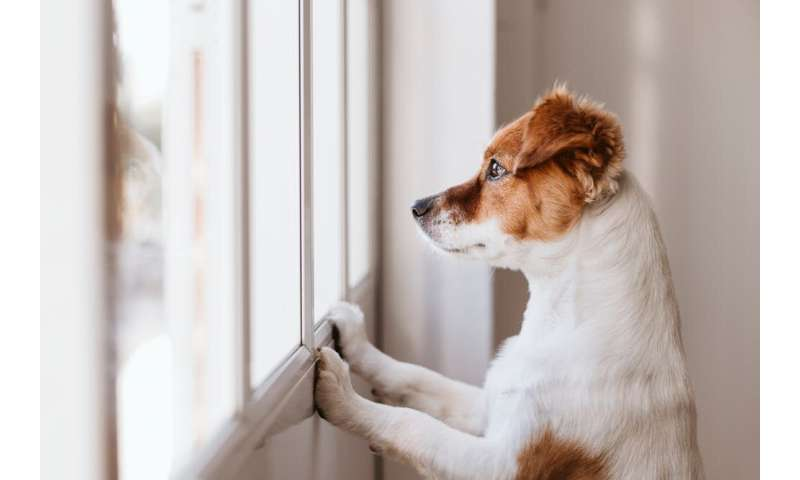 Routine and learning games: how to make sure your dog doesn't get canine cabin fever