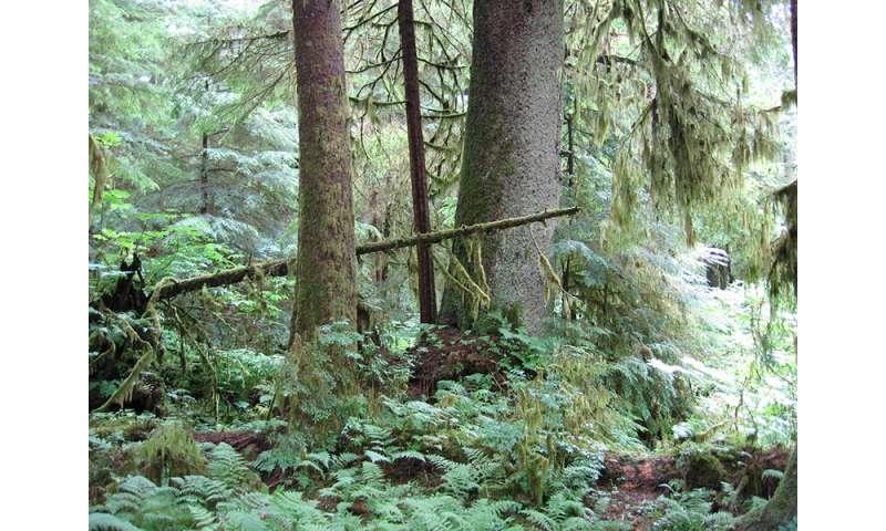 Salmon provide nutrients to Alaskan streambanks