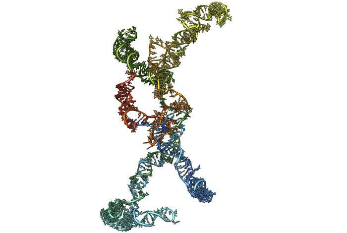 Scientists image heart RNA structure for the first time