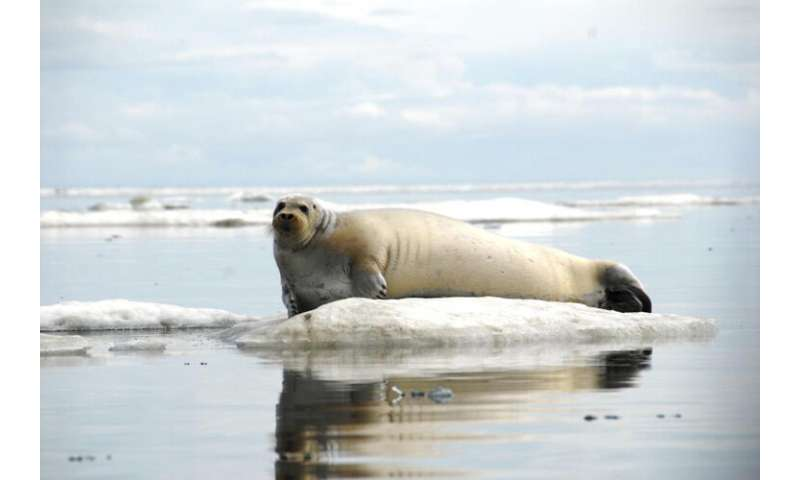 Scientists listen to whales, walruses, & seals in a changing arctic seascape