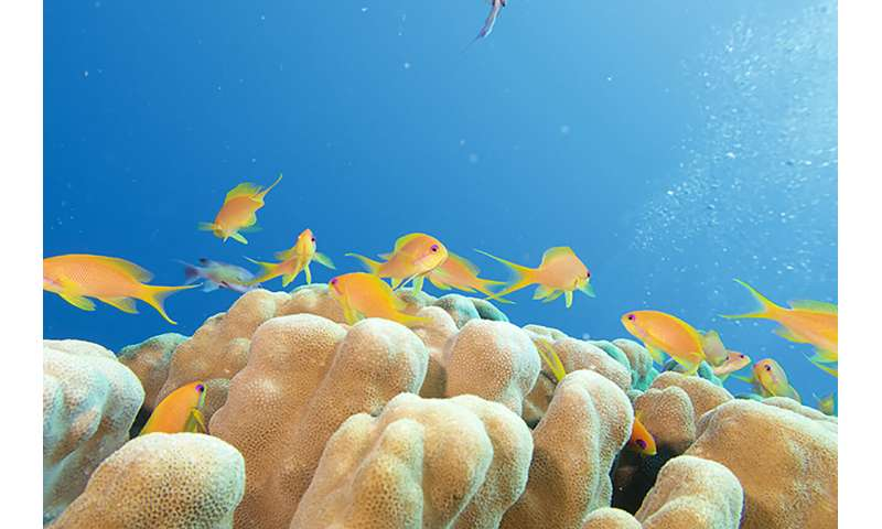 Scientists say it is time to save the red sea's coral reef