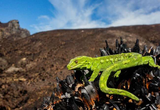 Scientists seek urgent action on impacts of climate change on reptiles and amphibians