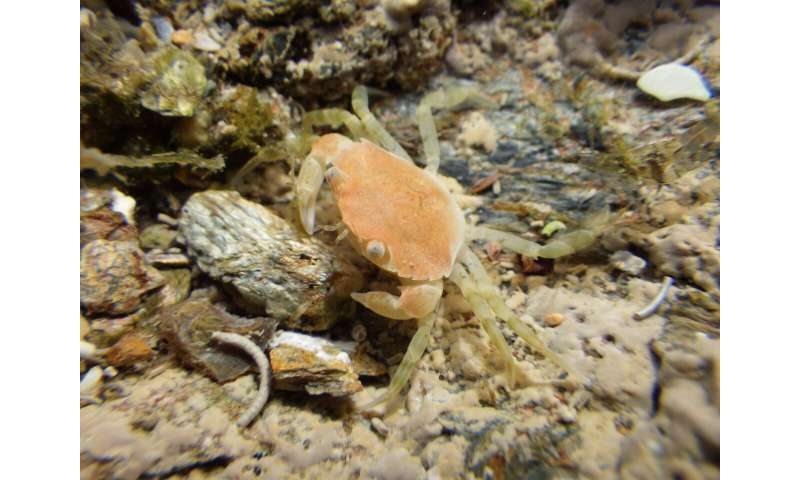 Ship noise hampers crab camouflage