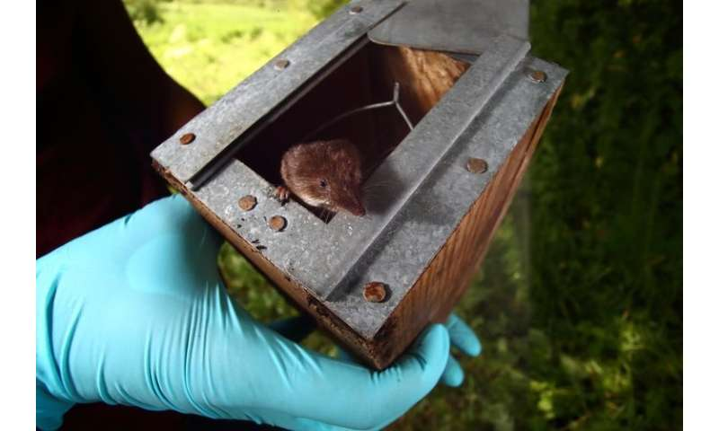 Shrinking instead of growing: how shrews survive the winter