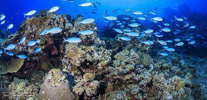 Simple framework helps future ocean studies