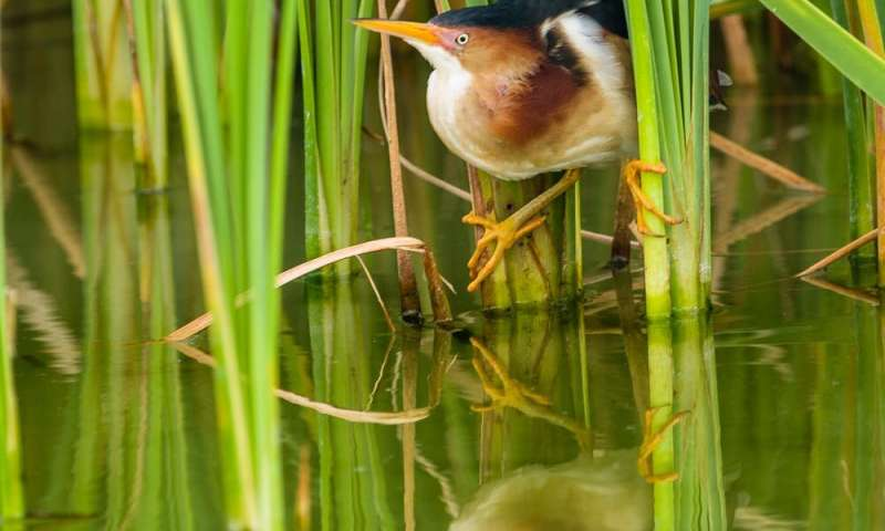 Sloshing through marshes to see how birds survive hurricanes