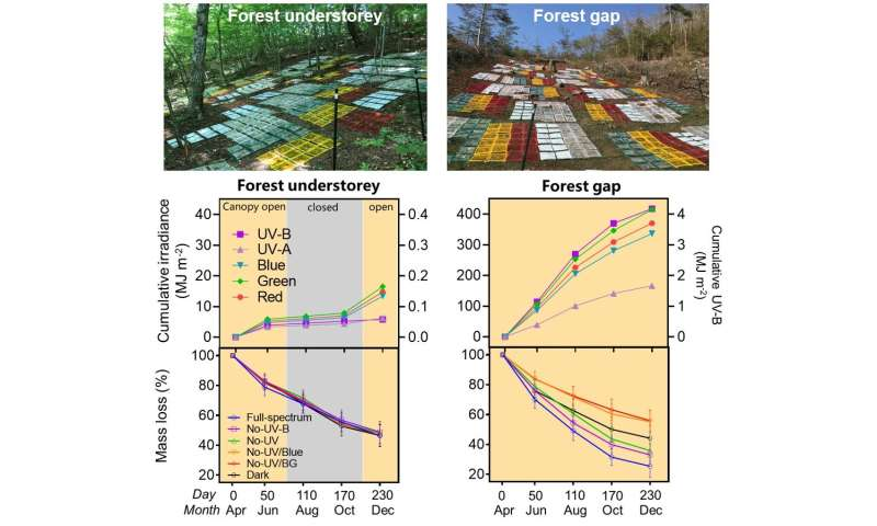 Solar radiation accelerates carbon cycle process of temperate forest ecosystems