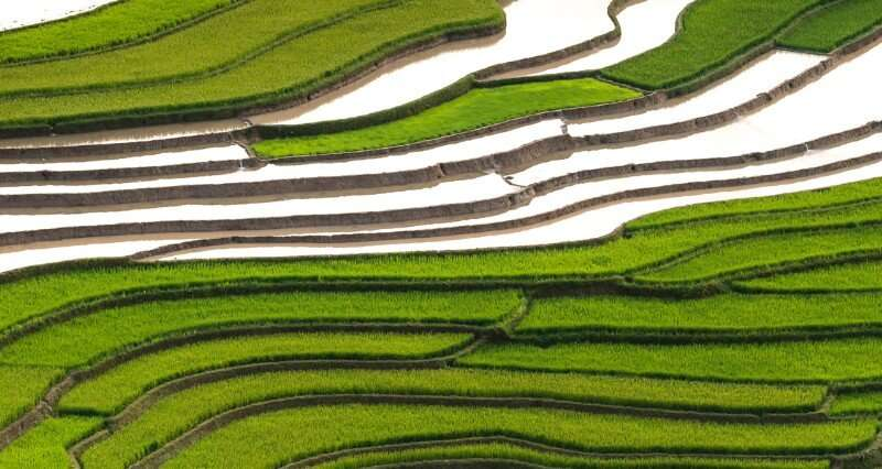 Study finds the fingerprint of paddy rice in atmospheric methane concentration dynamics