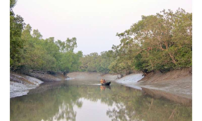 Study shows efforts in mangrove conservation and restoration paying off