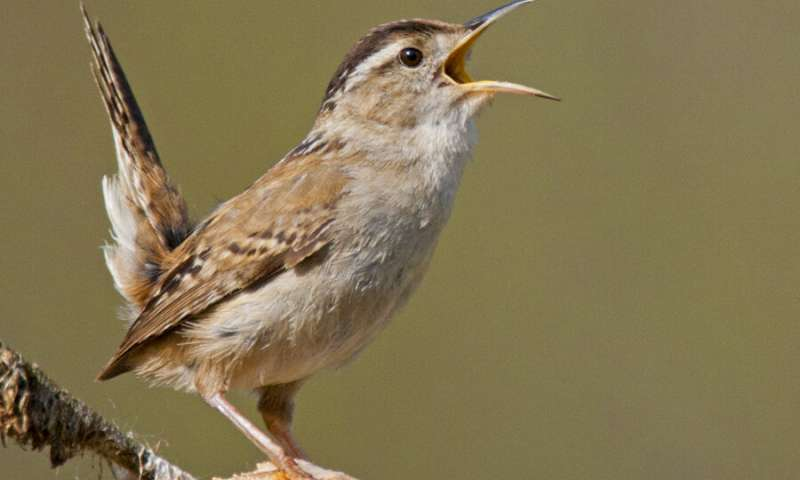 Study traces evolution of acoustic communication