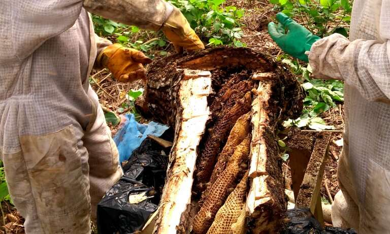 Sustainable honey for food and forests – A beekeeper's story
