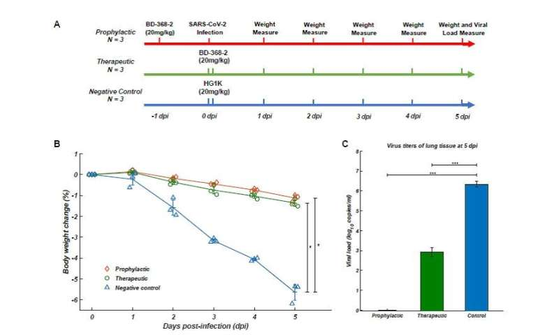 Team finds effective SARS-CoV-2 neutralizing antibodies
