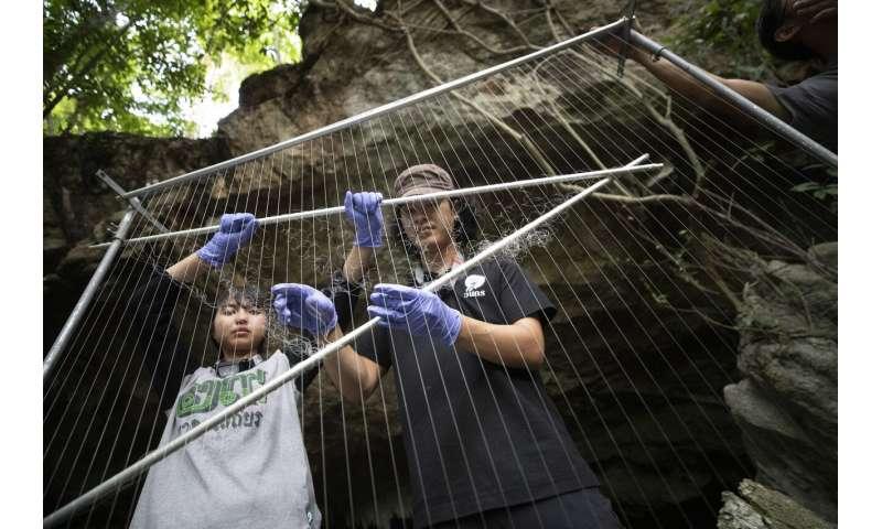 Thailändische Wissenschaftler fangen Fledermäuse, um den Ursprung des Virus zu verfolgen