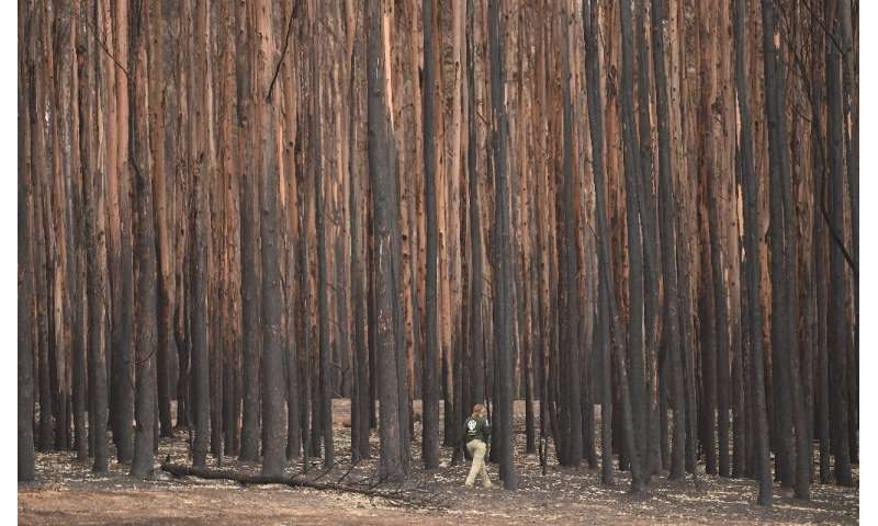 The bushfires in Australia this year have killed a billion animals by some estimates
