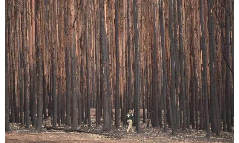 As queimadas na Austrália este ano mataram um bilhão de animais segundo algumas estimativas