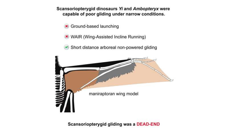 These two bird-sized dinosaurs evolved the ability to glide, but weren't great at it