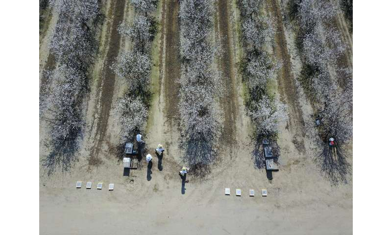 To bee, or not to bee, a question for almond growers