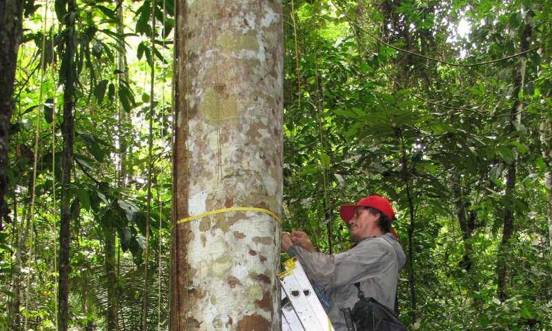 Tropical forests' carbon sink is already rapidly weakening